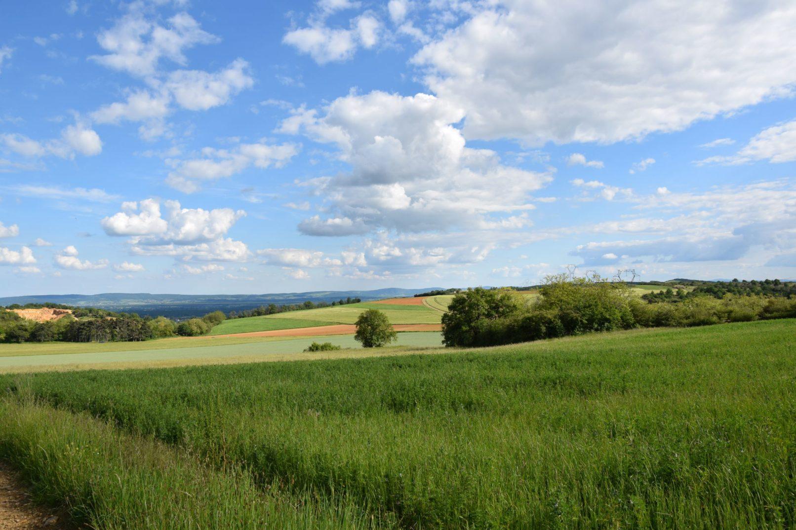 Un champ de céréales