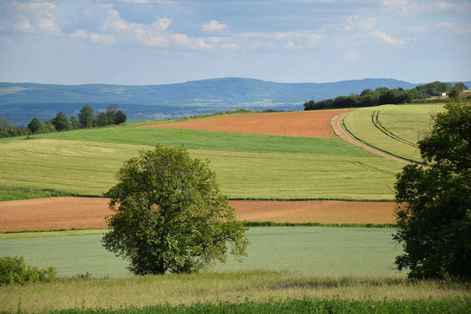 Des champs bourgignons