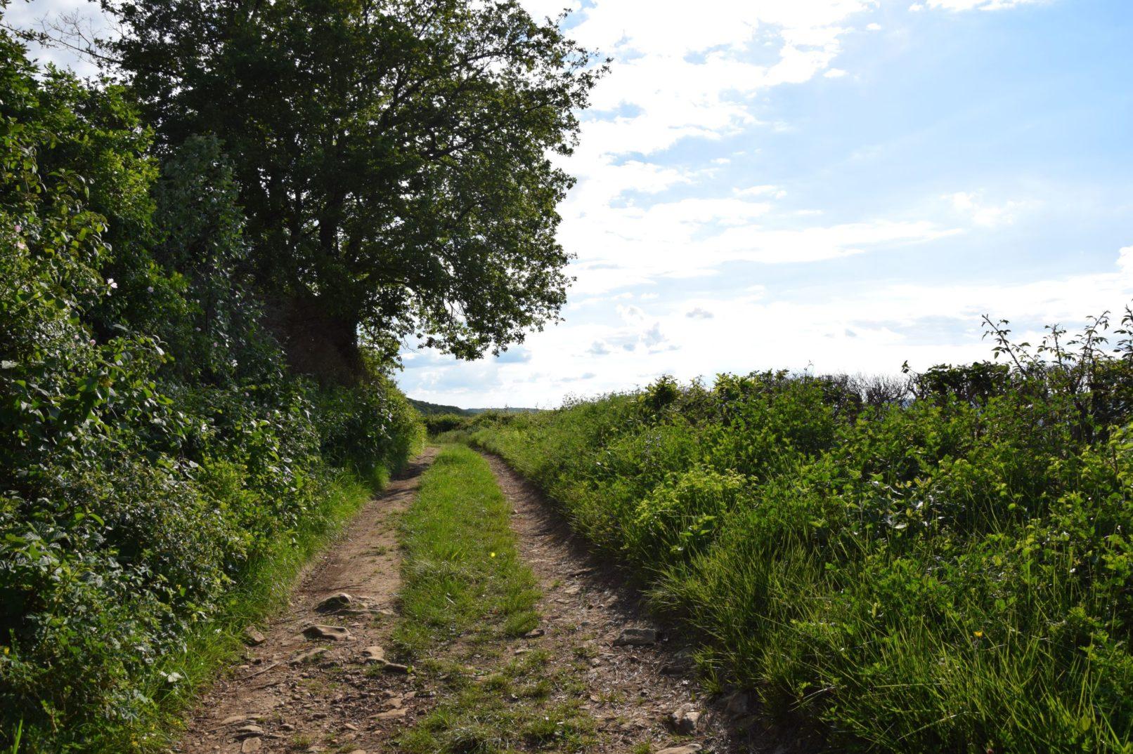 Un chemin de balade